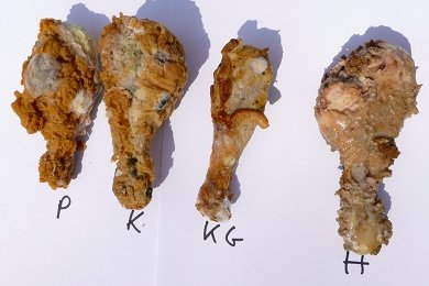 Fried Chicken Rot Experiment: Results