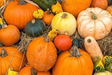 Healthy Fall Recipes