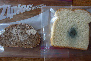 Healthy Bread Test